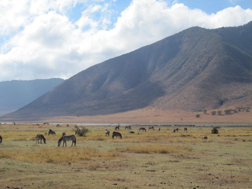 safari, Ngorongoro, Africa, wildlife