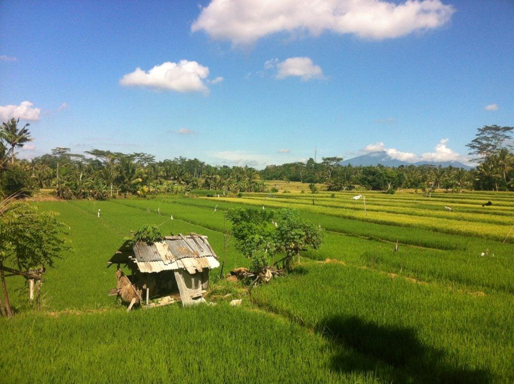 Rice paddies in budget travel location Bali