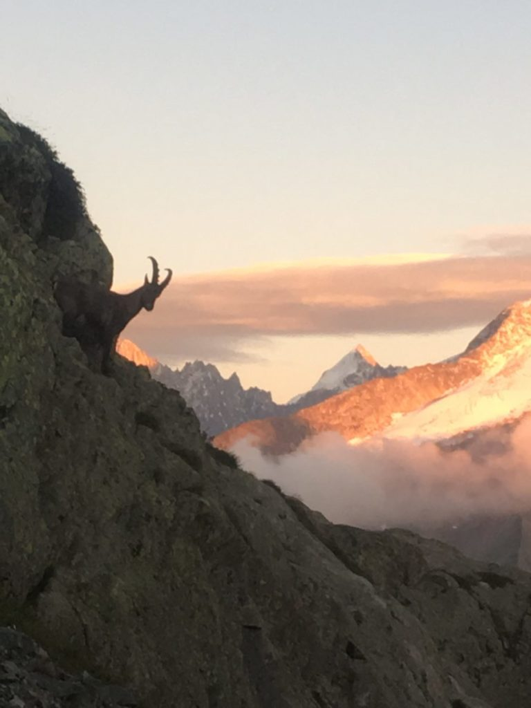 Ibex at Lac Blanc
