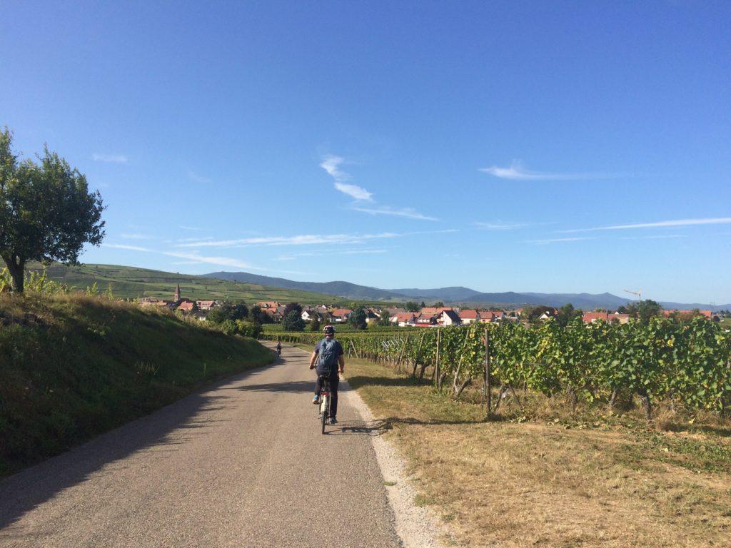 Man biking in French vineyard
