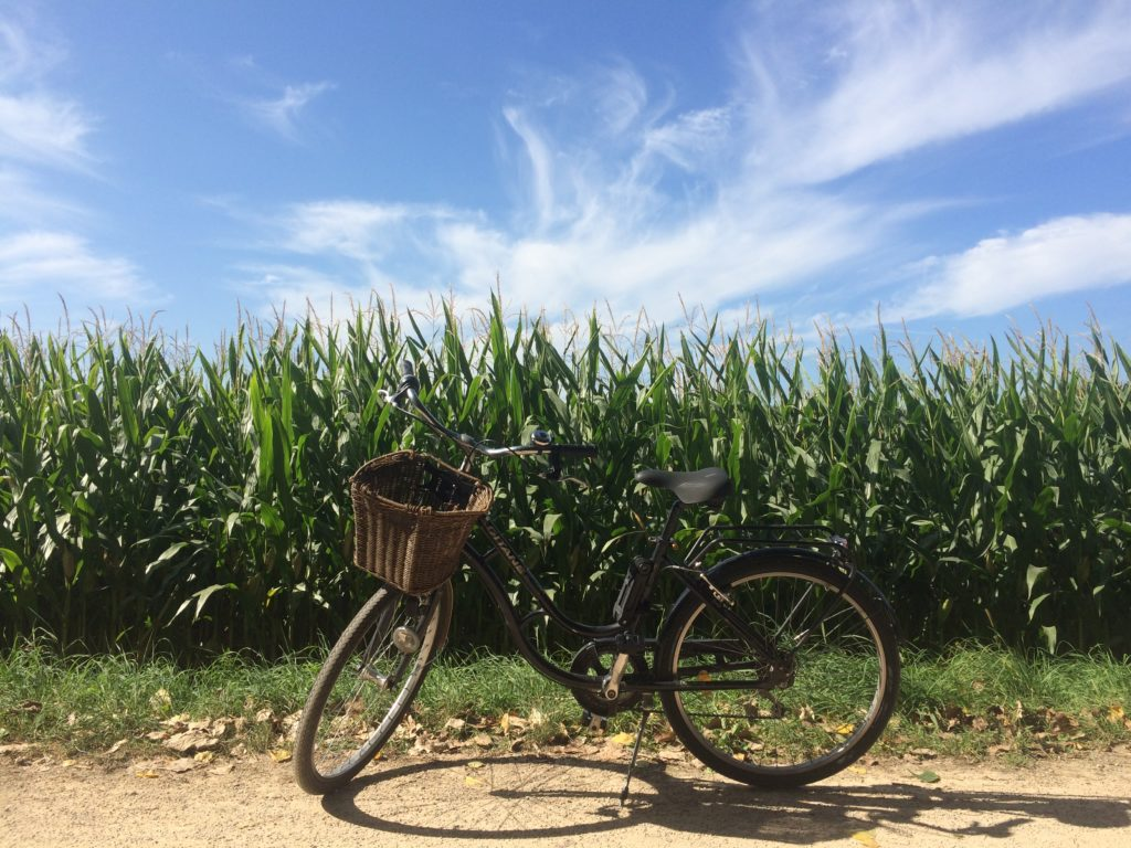 Cruiser bike in front of French corn field