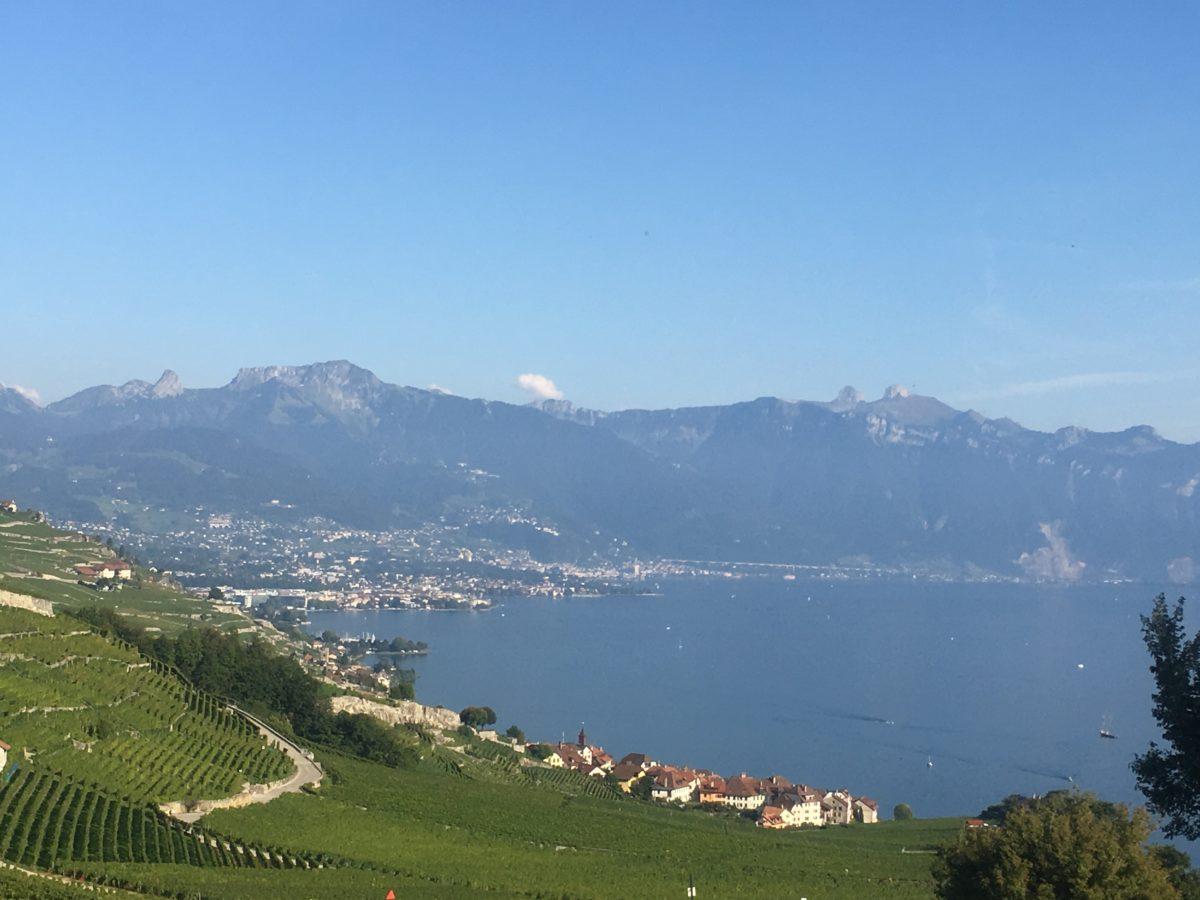 Vineyard on Lake Geneva