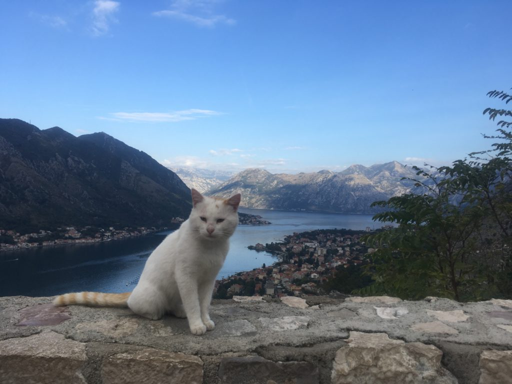 Cat on the walls of Kotor