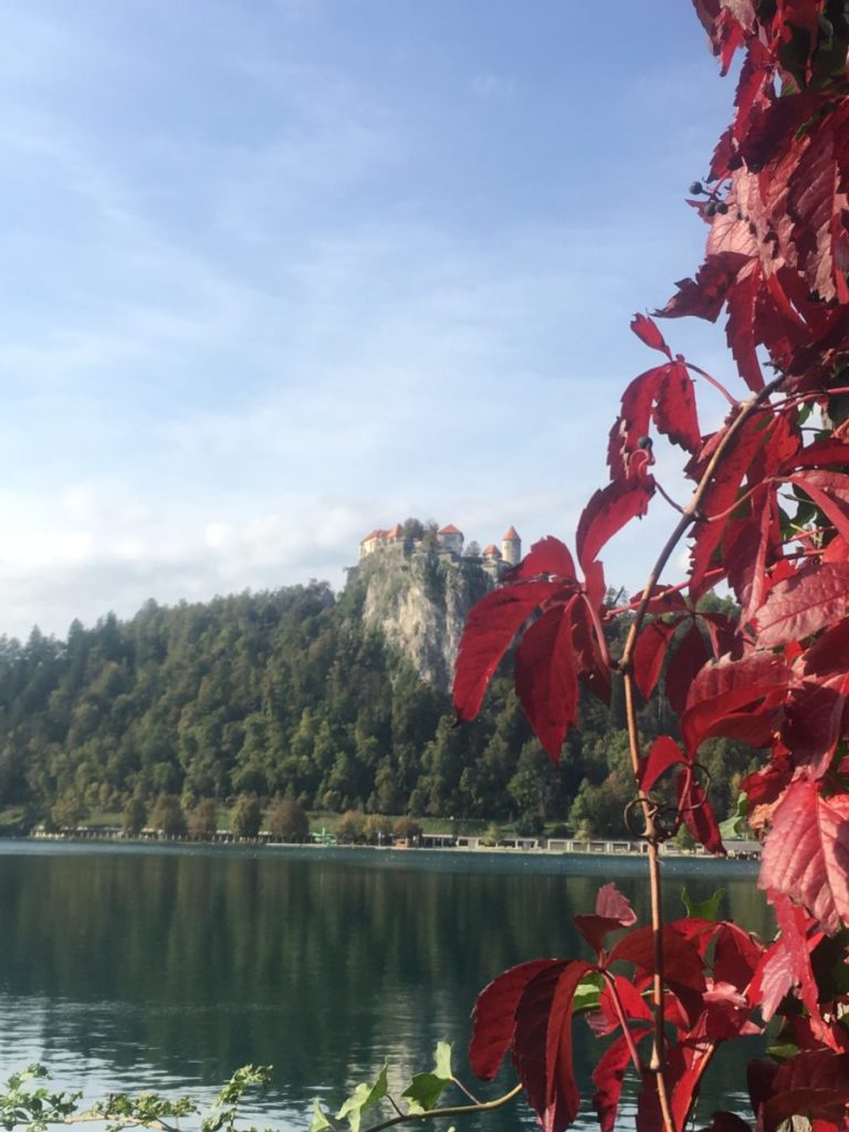 Red leaves with Bled Castle in the background