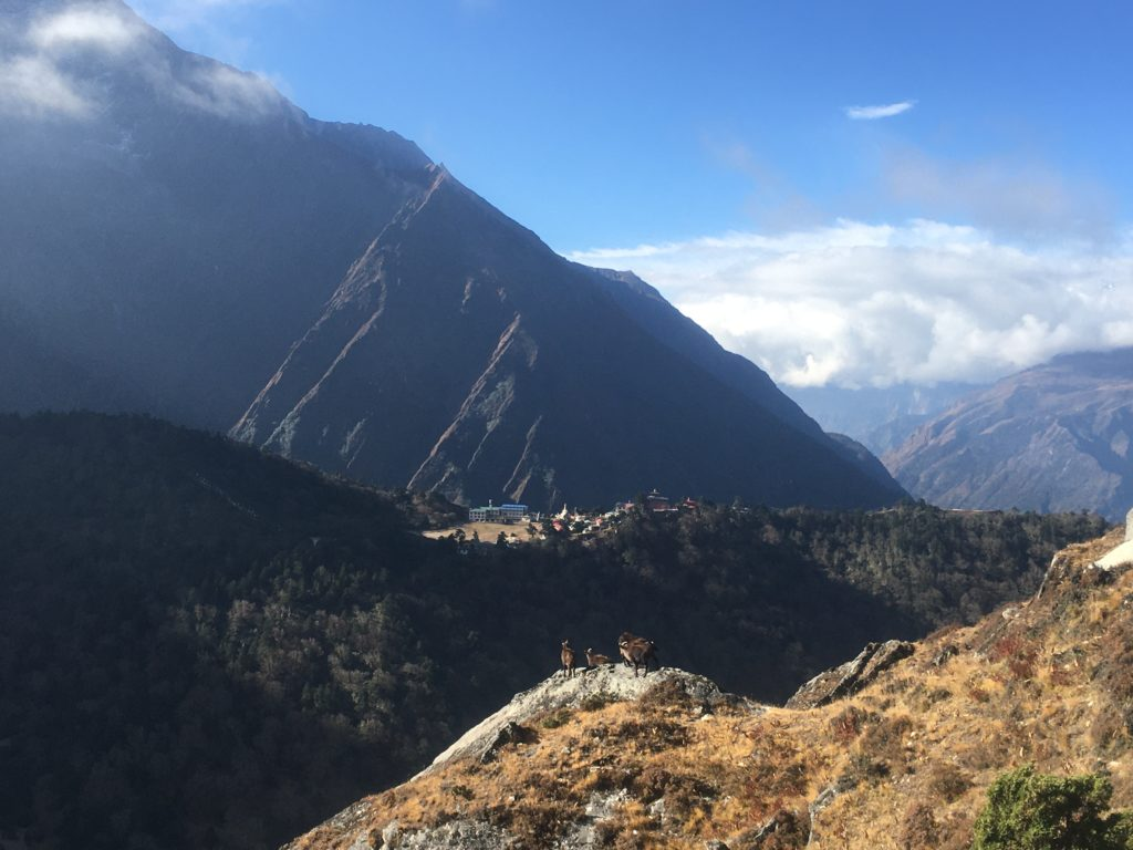 Tengboche Monastery and mountain goats in Nepal