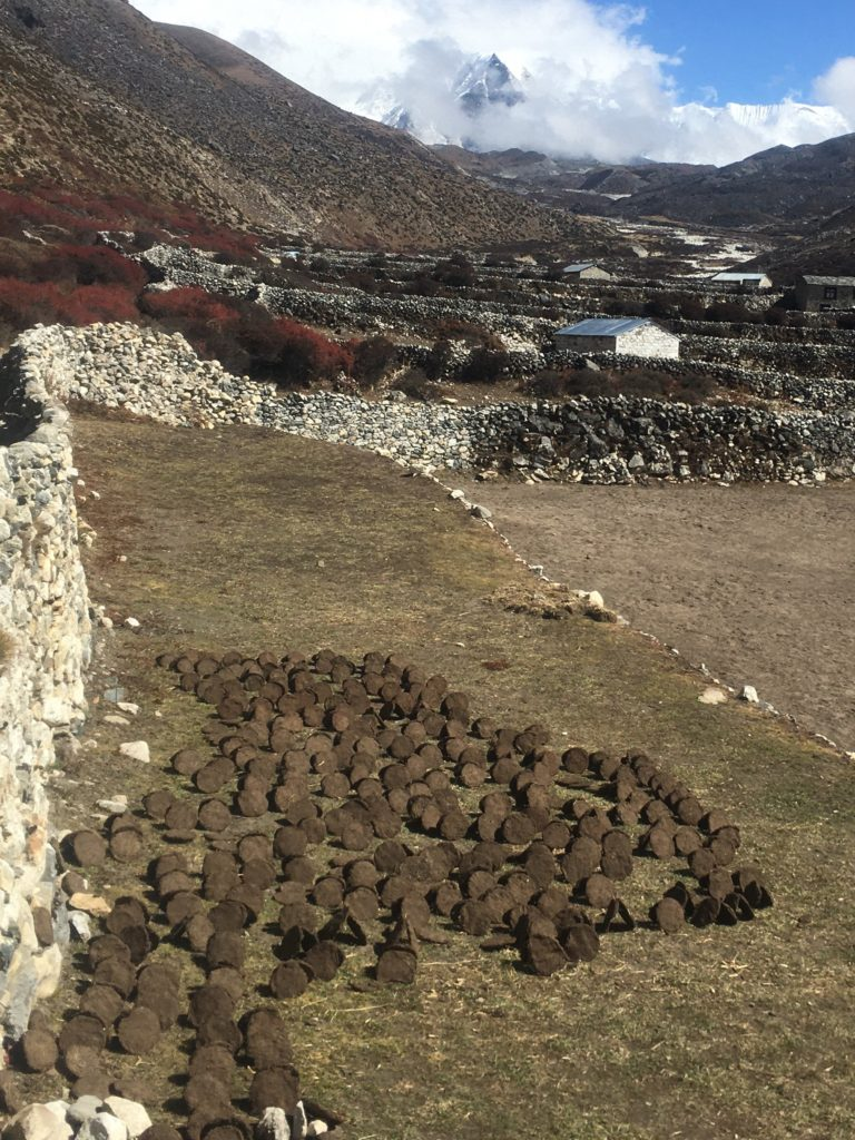 Yak dung drying in the sun