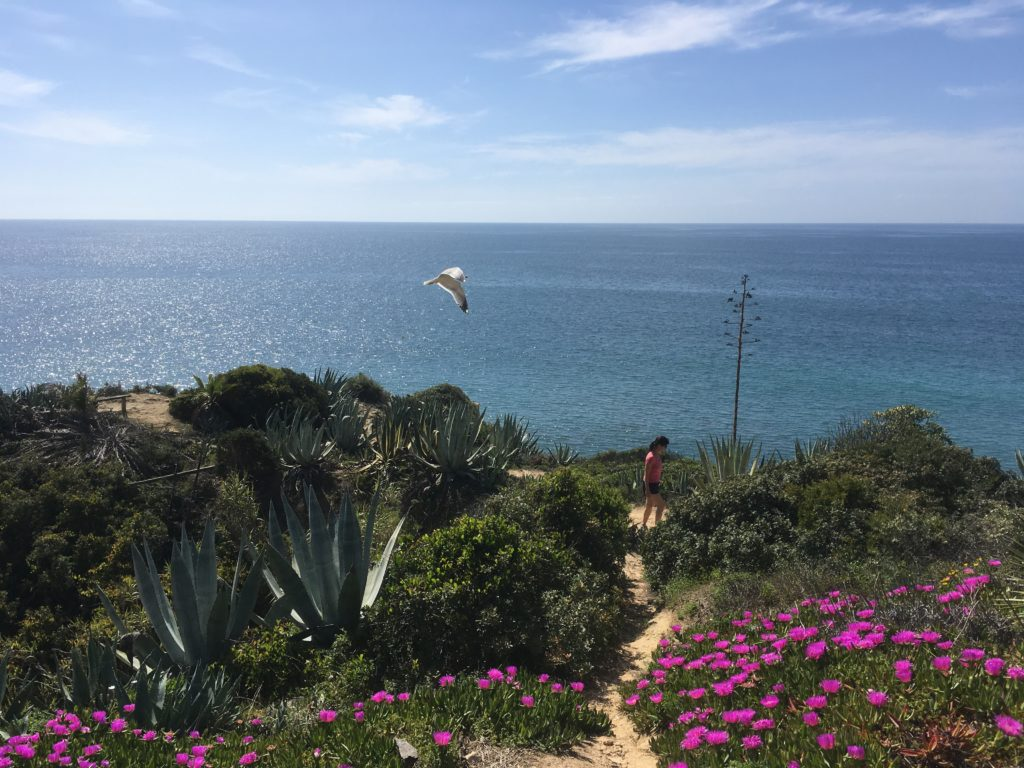 Woman hiking on the Algarve coast while bird flies past