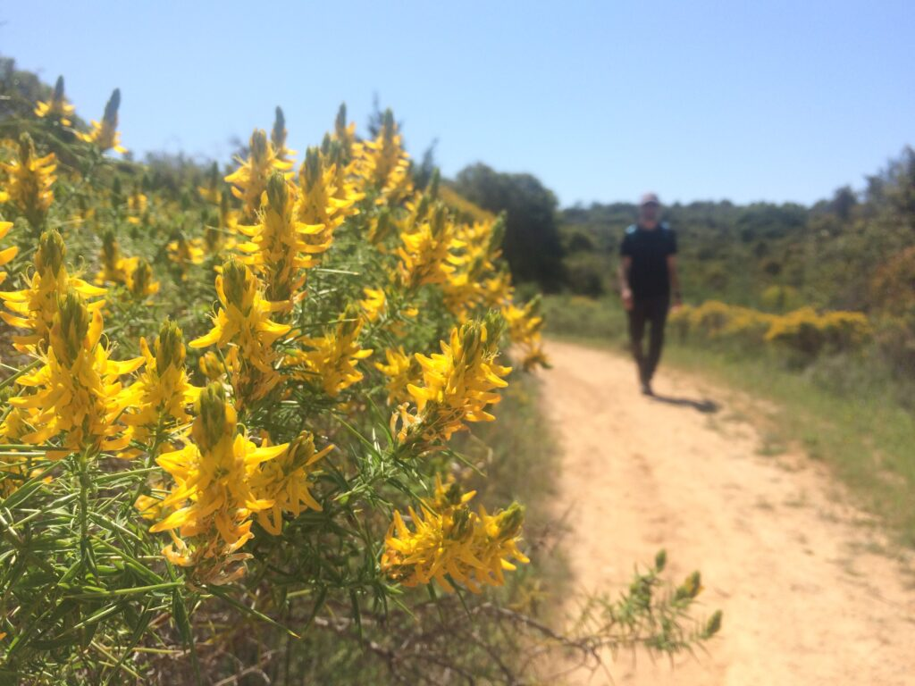 Man walking on dirt path with yellow flowers near Armacao de Pera Portugal