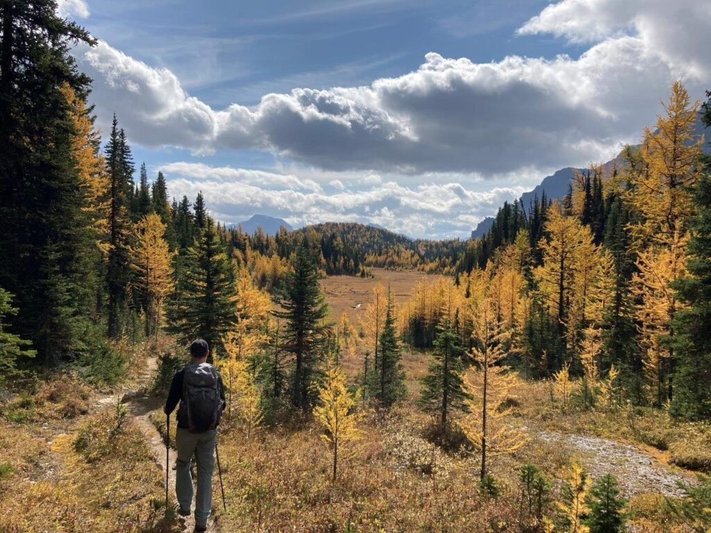 Man hiking through meadow of larches to Eohippus Lake in Banff National Park