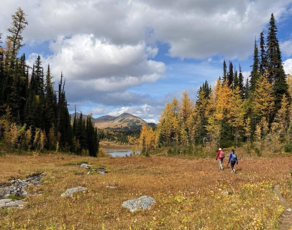 Hikers approaching lake surrounding by yellow trees on one of the best hikes Canmore offers