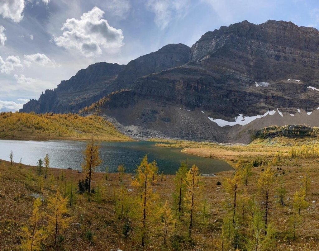 Eohippus Lake with yellow larches and a mountain in the backon one of the best hikes Canmore has.