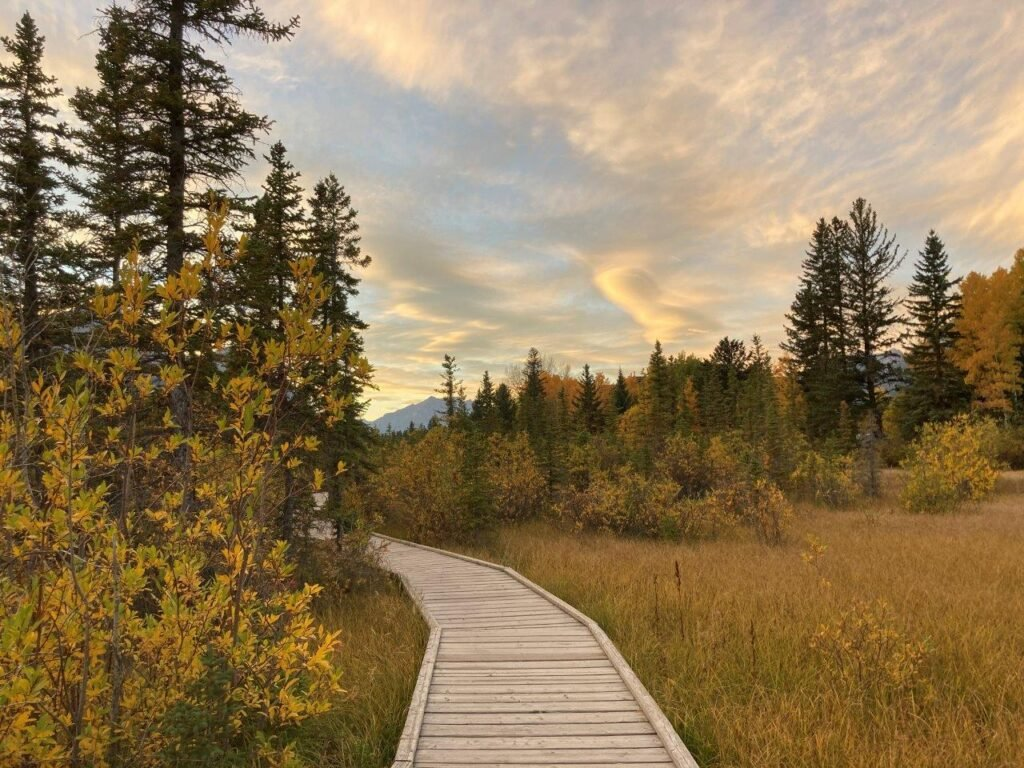 A boardwalk through a marsh - one of the best easy Canmore hikes