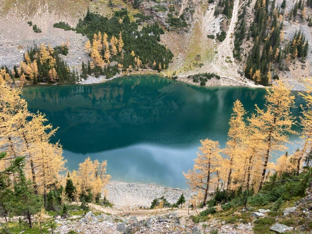 View of Lake Agnes surrounded by yellow larch trees from above from the switchbacks on the Big Beehive trail