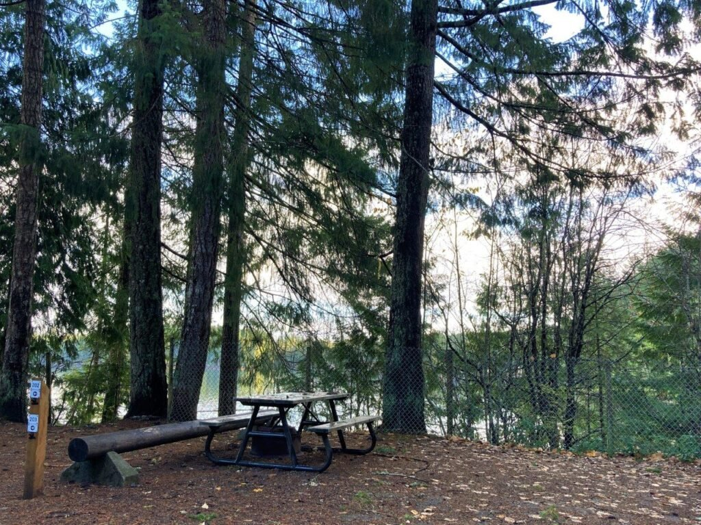 Lake Comox Campground spot in the woods