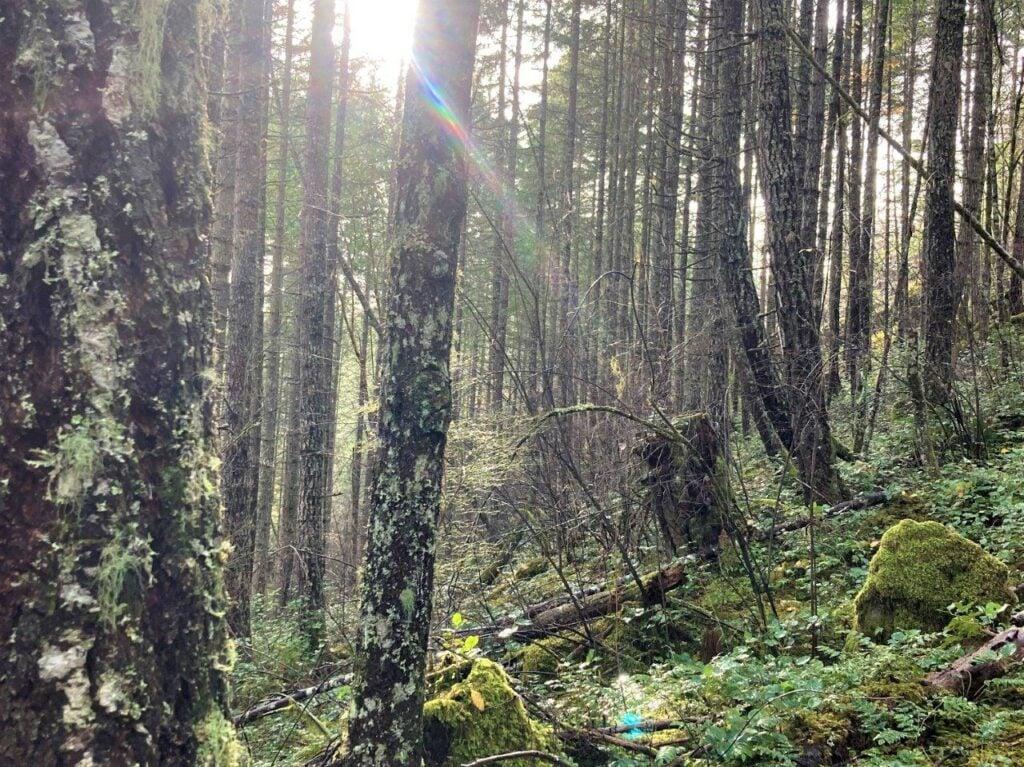 Sun coming through the trees on Comox Lake hiking trail