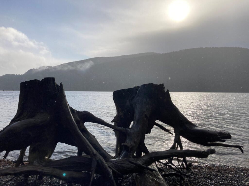 Silhouette of old tree stumps in front of Comox Lake