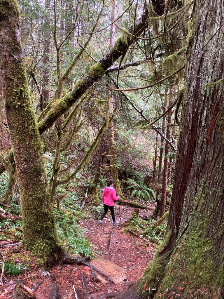 Hiker in the Cumberland bc forest