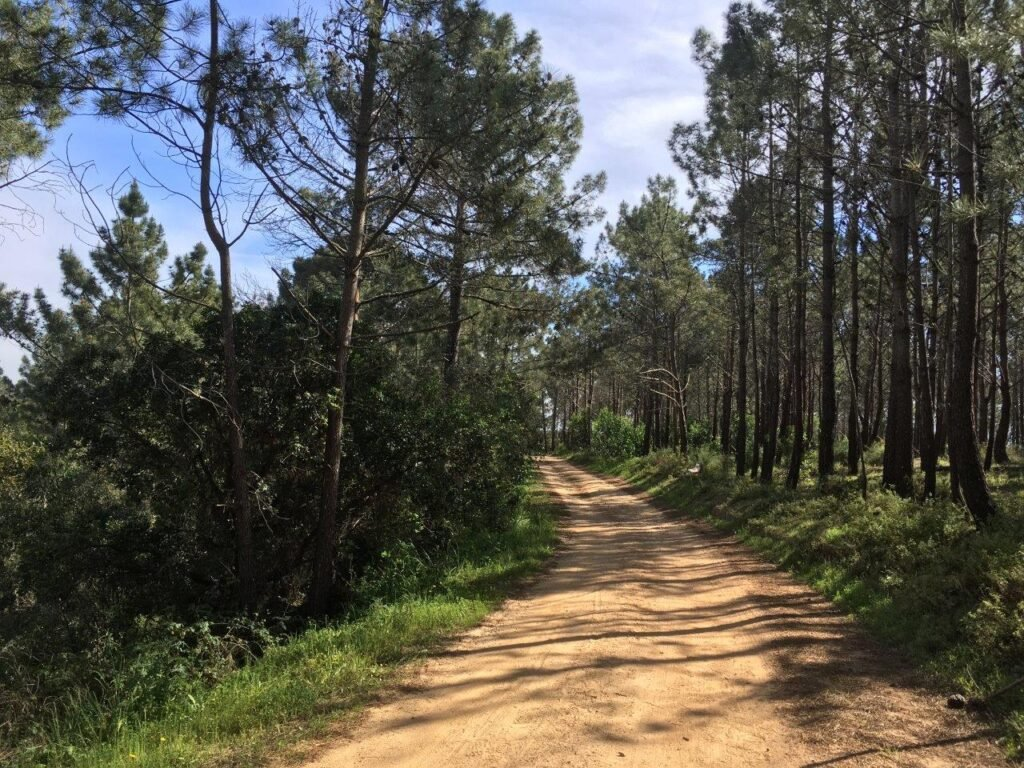 Dirt road through the trees near Aljezur Portugal