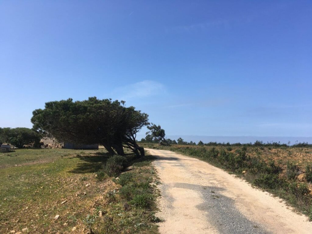 Empty dirt road with large tree bordered by fields near Carrapateira Portugal