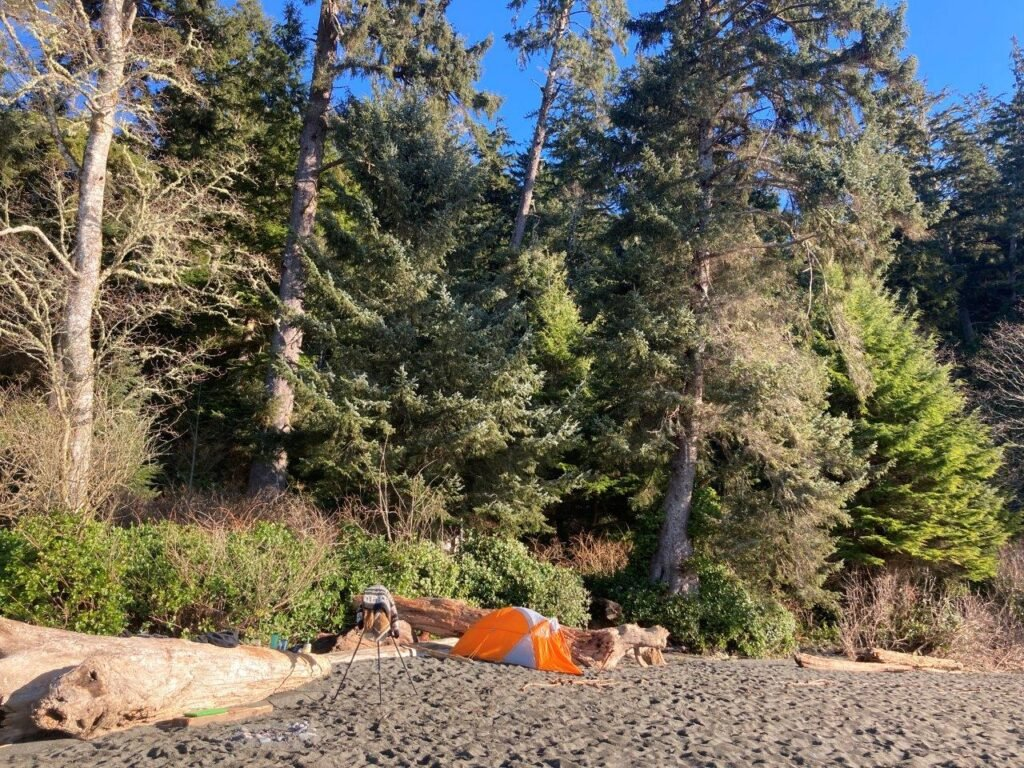 Orange tent by driftwood in front of large trees on the Sombrio Beach camping