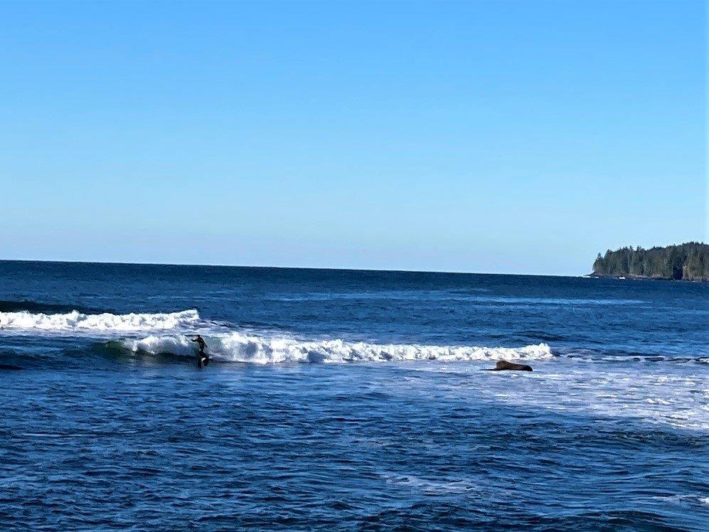 The ocean with trees in the background and Botanical Beach surfing surfer on one of the waves