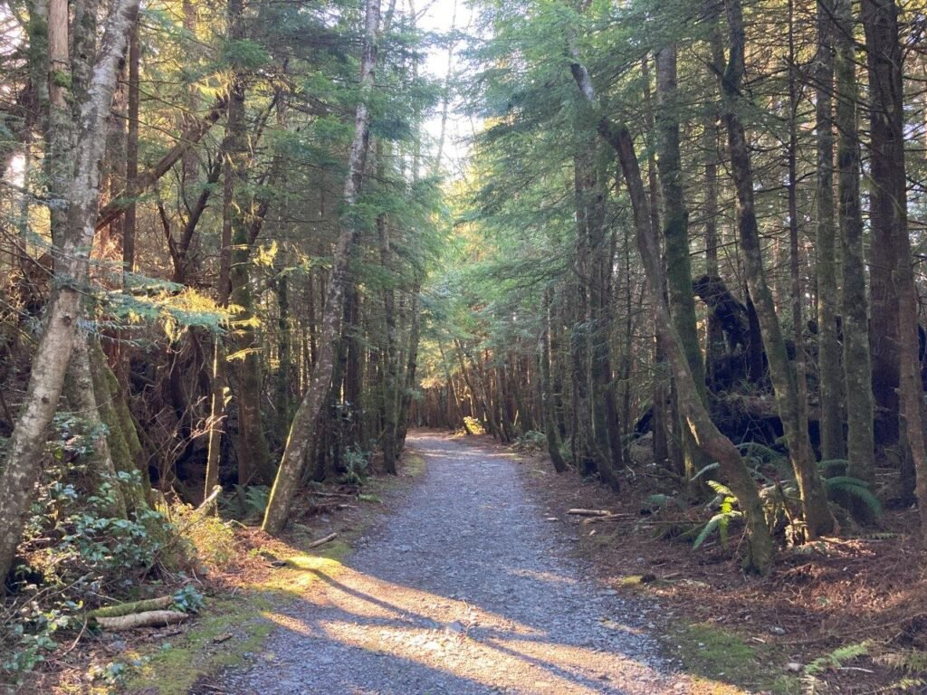 Wide flat trail trail with tall trees on each side going to Botanical Beach