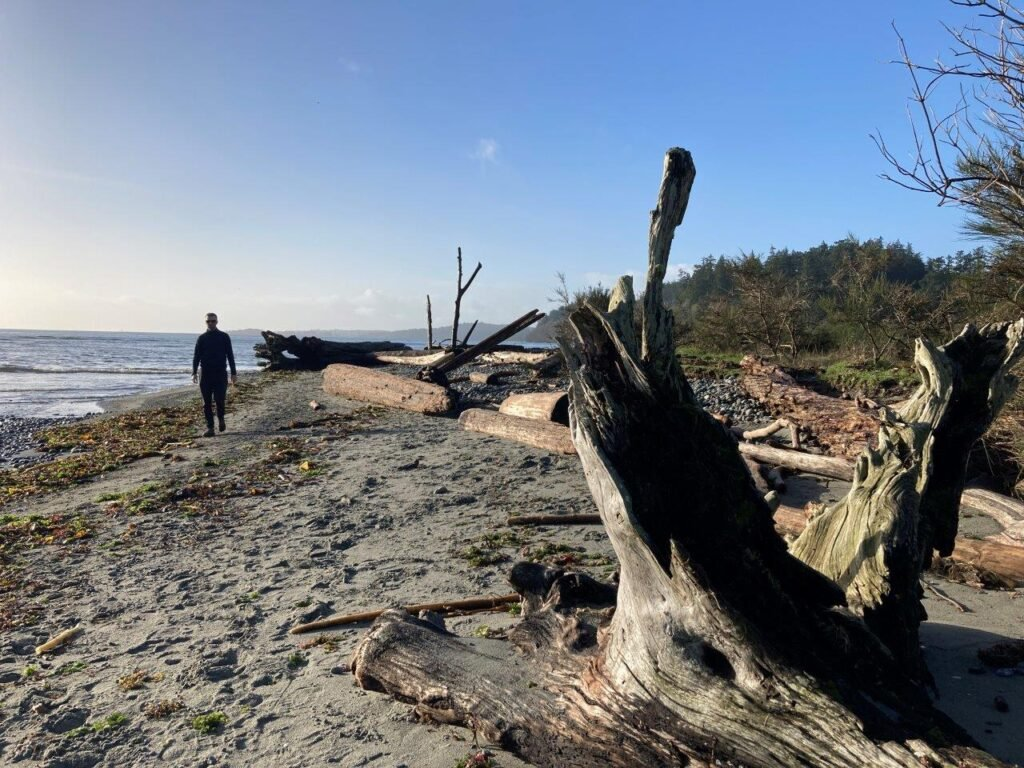 Man walking down sandy beach with large pieces of driftwood by Wittys Lagoon