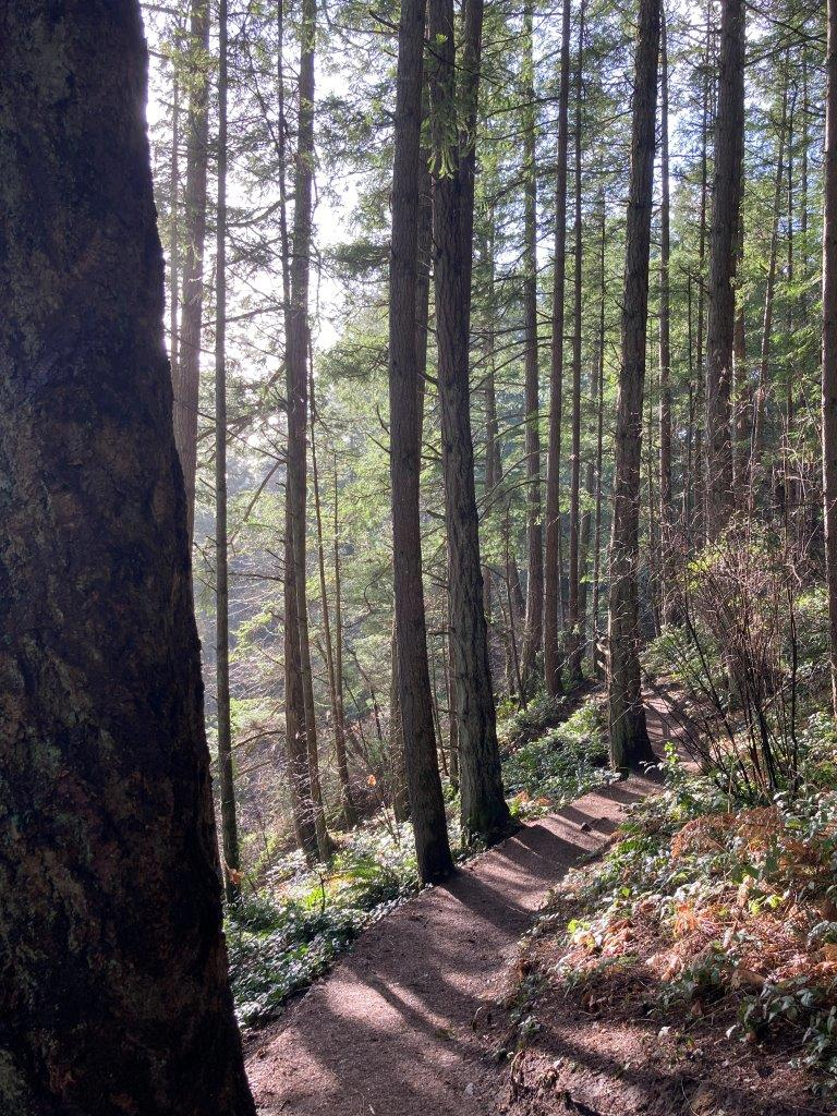 A dirt trail through tall trees on the way to Witty's Lagoon beach