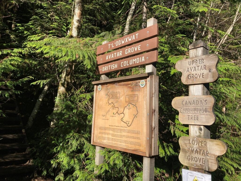A sign and map for the Avatar Grove walking trails