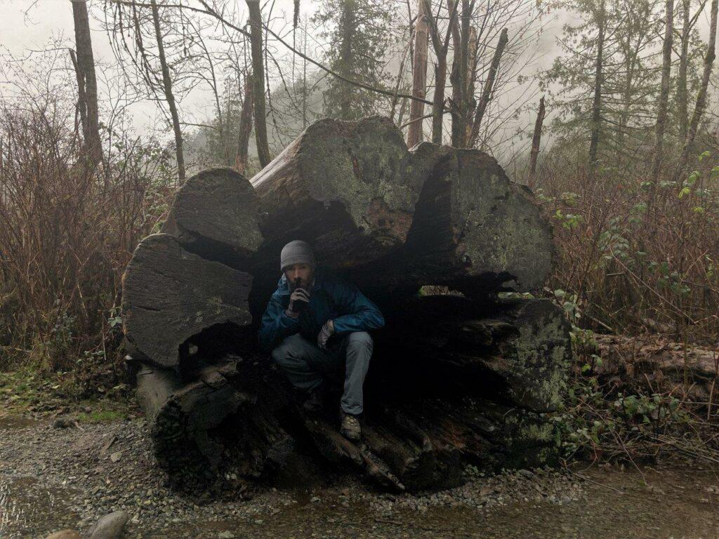 Man inside fallen giant cedar
