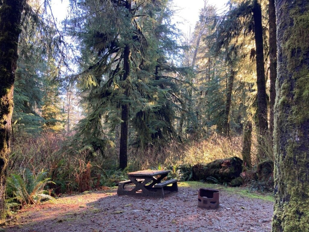 Fairy Lake Campground site with a fire pit, a picnic table and tall trees - a Port Renfew campground