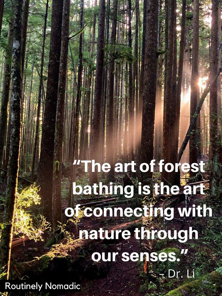 Sun streaming through the trees with a forest bathing quotes on top