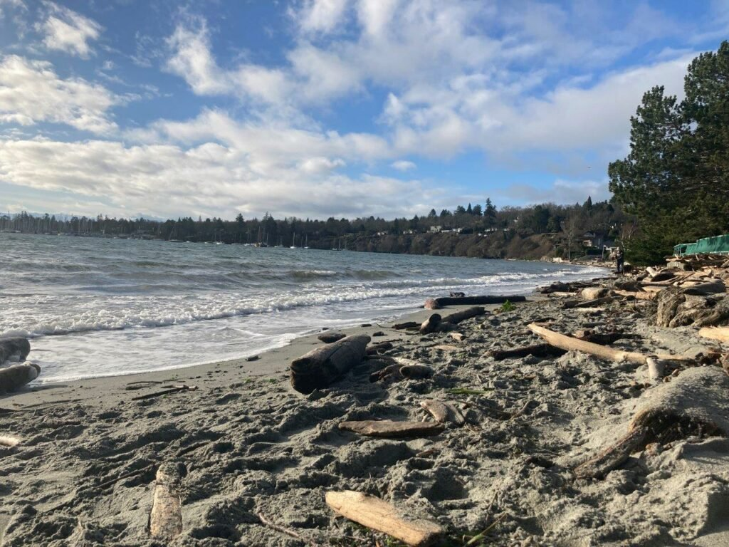 Sandy beach with driftwood and trees in background at Gyro beach Victoria