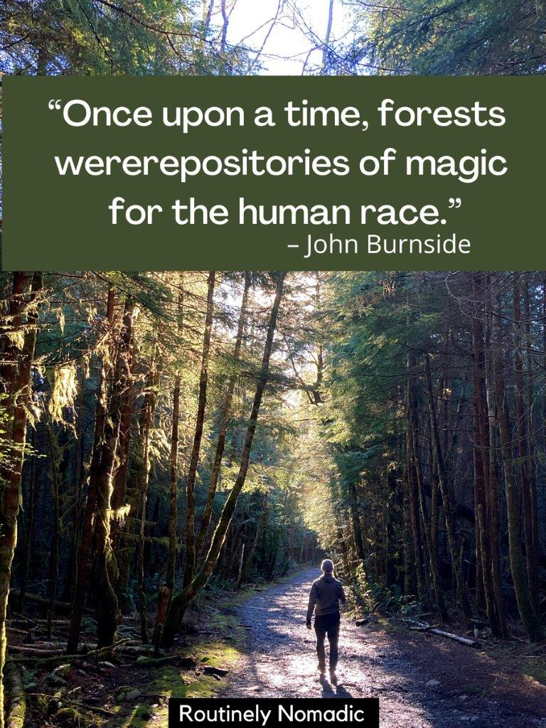 Man walking on trail with dense forest on both sides and a magical forest quote on top
