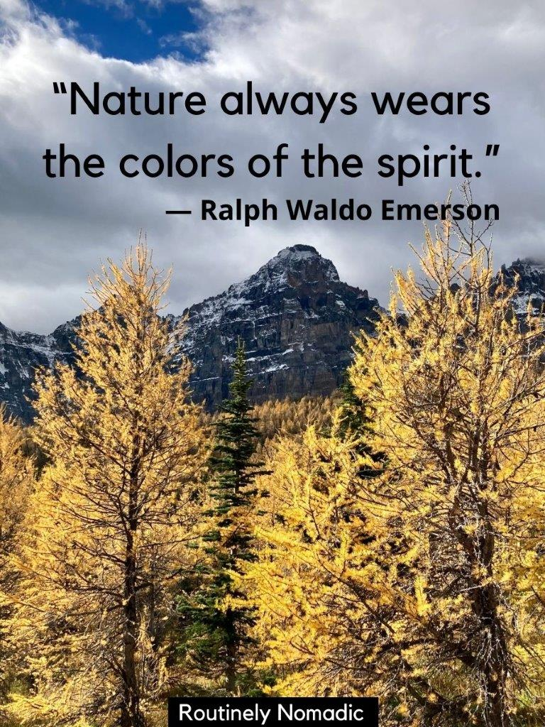 Yellow larch trees with mountains in the background and a nature captions for photos on top