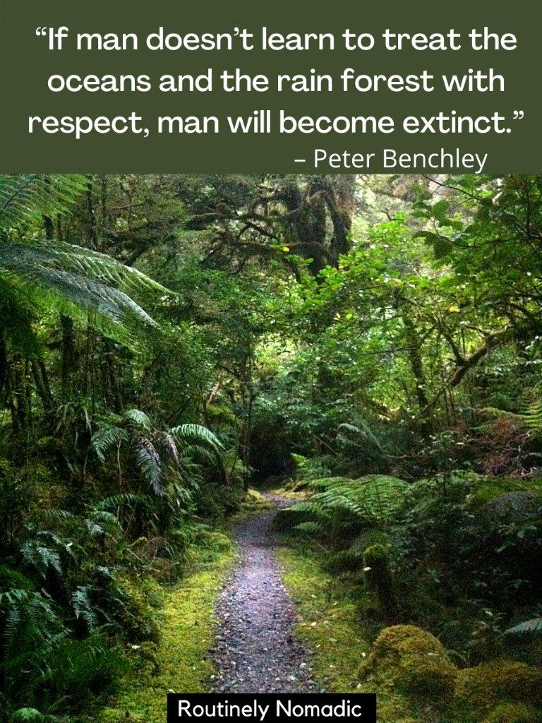 Path through lush green forest with a rainforest quote on top