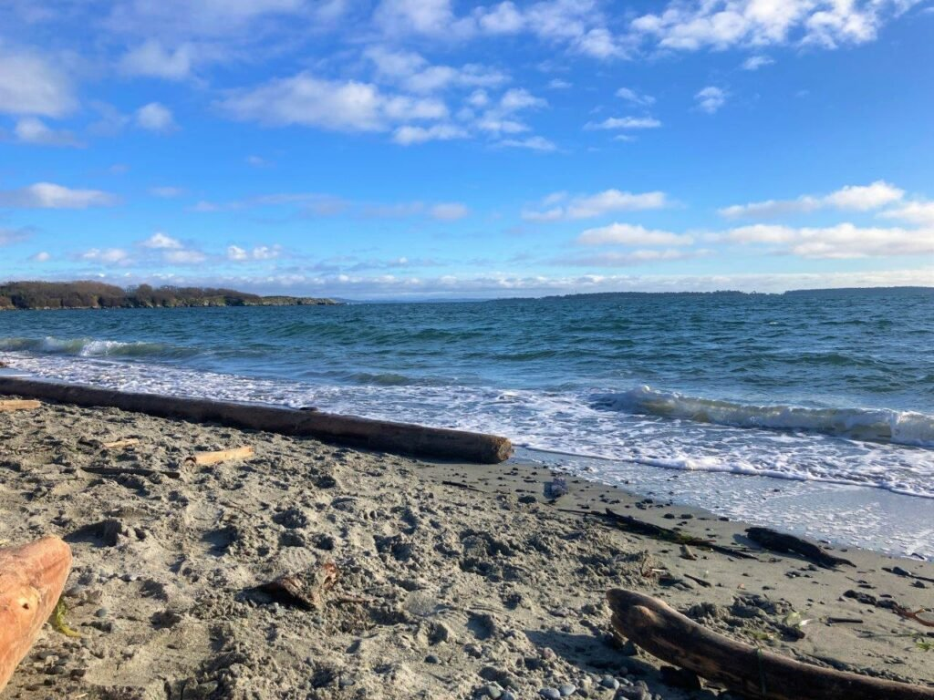 Sandy beach with driftwood and ocean stretching into the distance Willows Beach Victoria