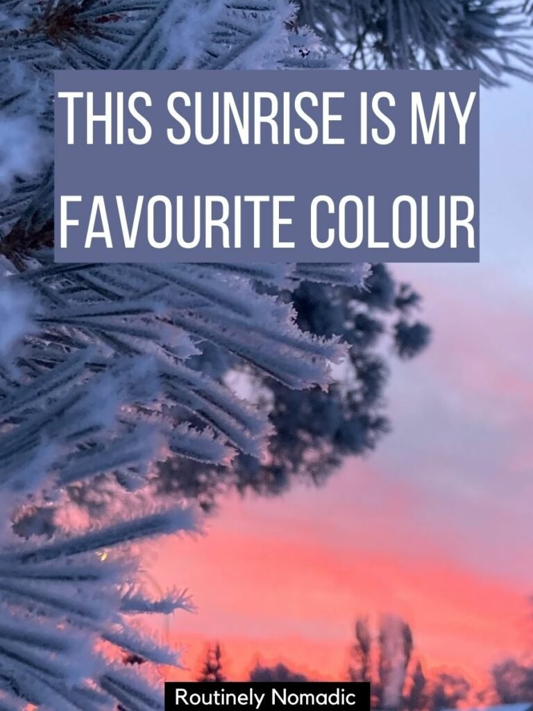 Closeup of a frosted pine tree with a pink sunrise behind and a best sunrise captions for Instagram on top that reads this sunrise is my favourite colour