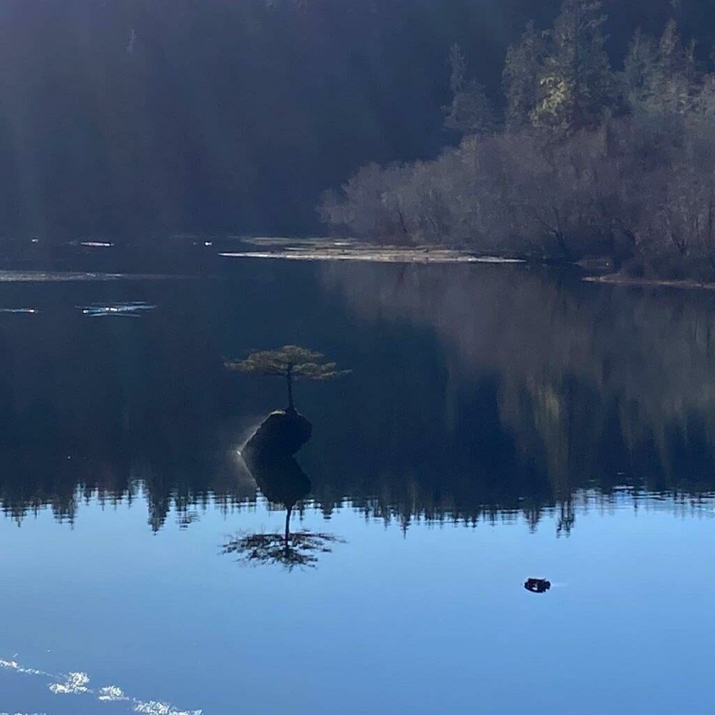 Fairy Lake BC bonsai tree