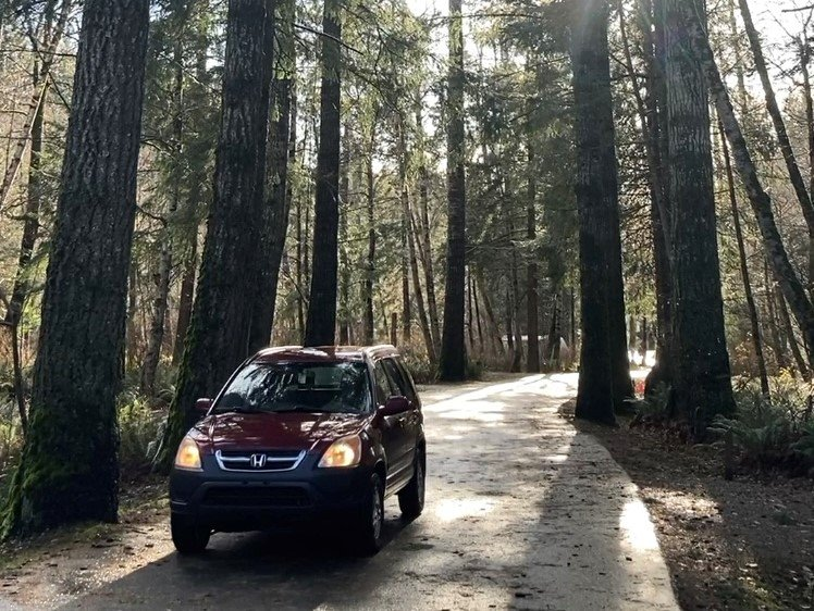 Driving through Campbell River forest