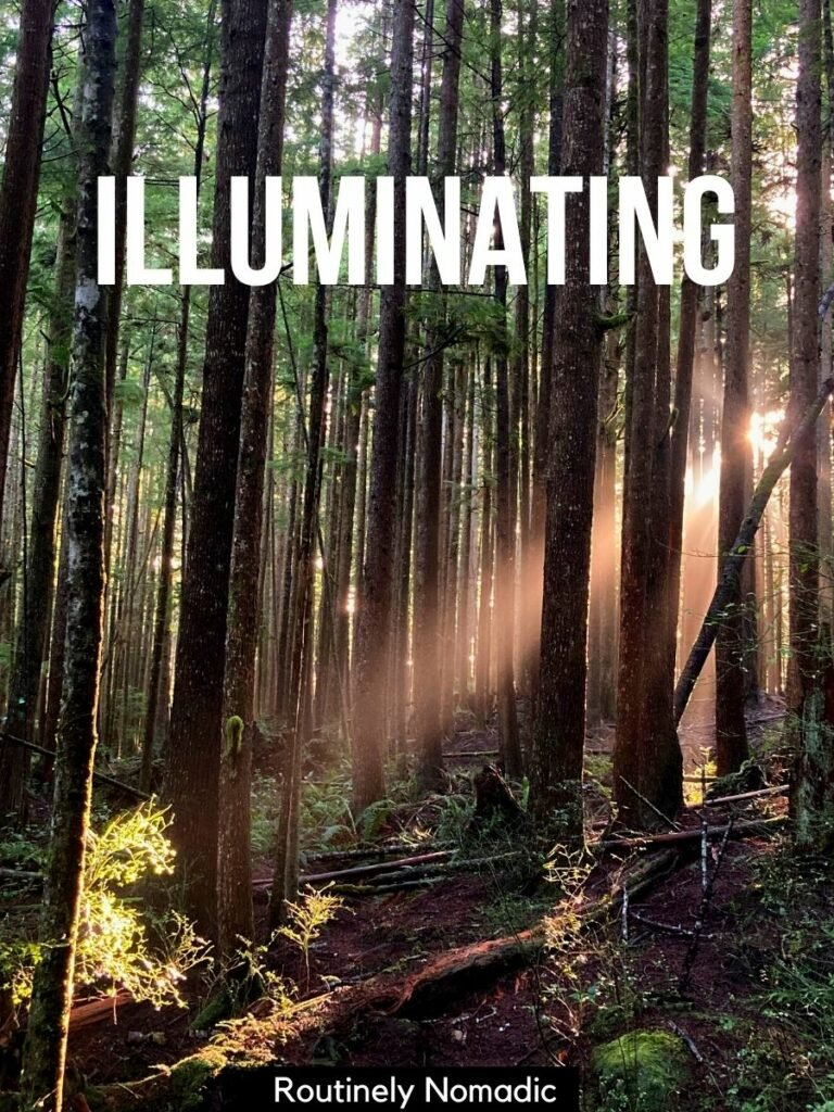 A ray of sun coming through the trees with a one word caption for nature photography on top that says illuminating