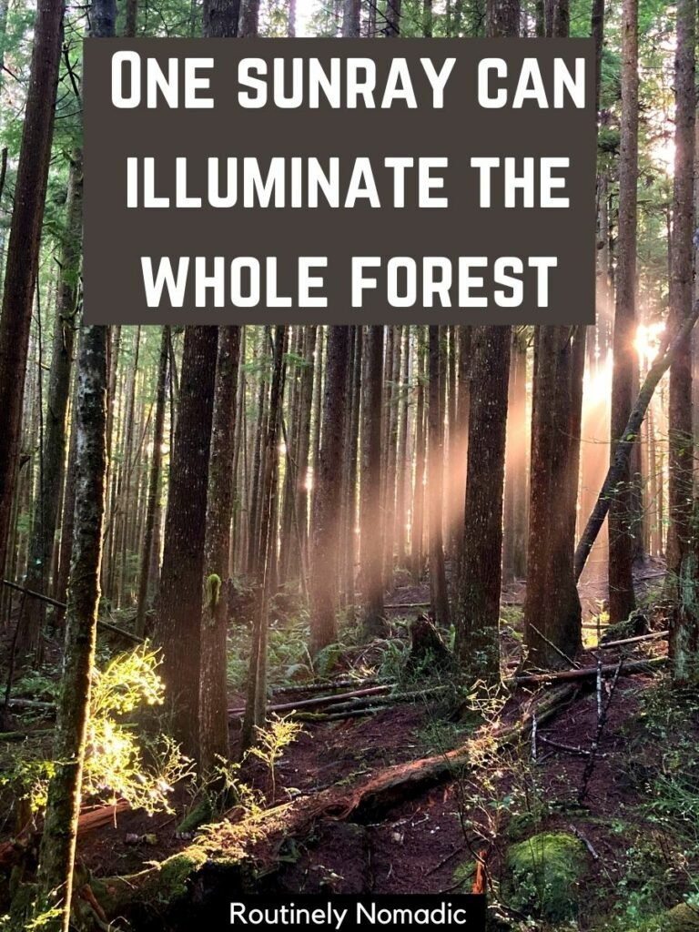 A forest with a beam of light shining through and a sunrays captions for Instagram on top that reads one sunray can illuminate the whole forest