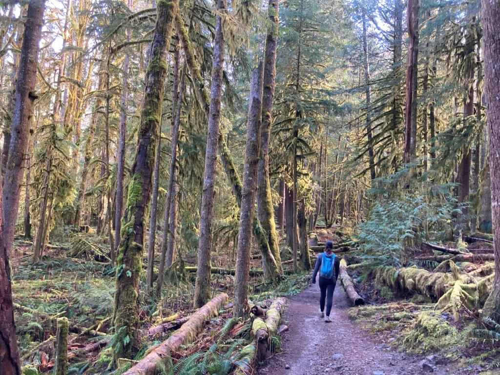 Woman walking on trail through the moss covered forest on an easy Squamish hikes