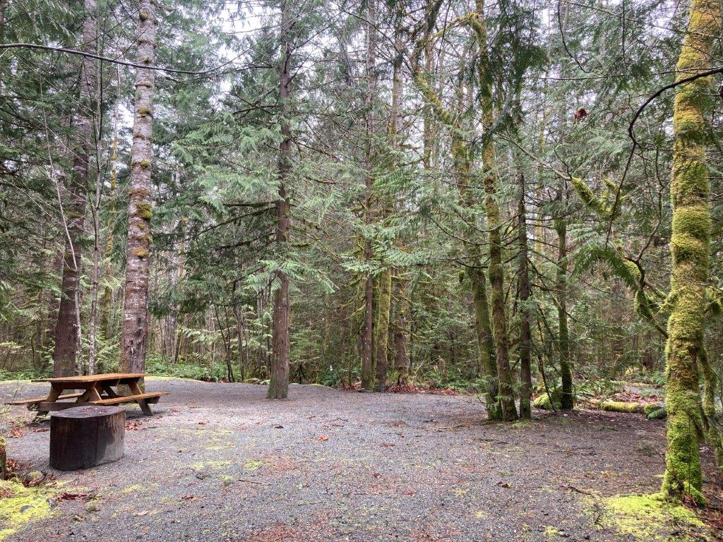 A empty campsite in the trees at Paradise Valley Campground - one of the best Squamish camping options