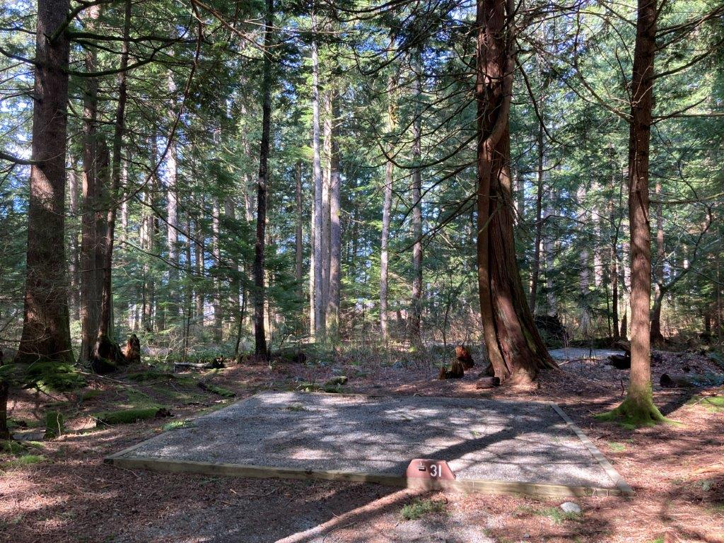 A empty campsite surrounded by large trees at the Stawamus Chief Campground - one of best camping Squamish BC options
