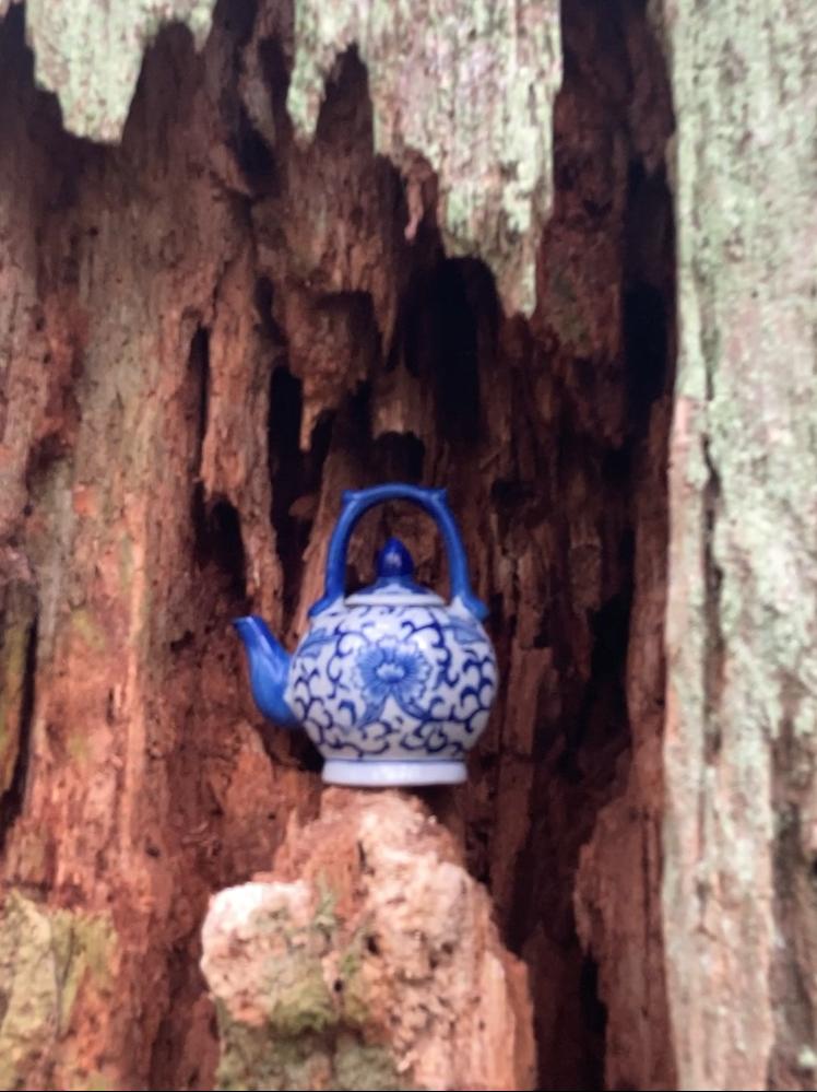 Blue tea pot hidden in a tree trunk on the tea pot hill hike