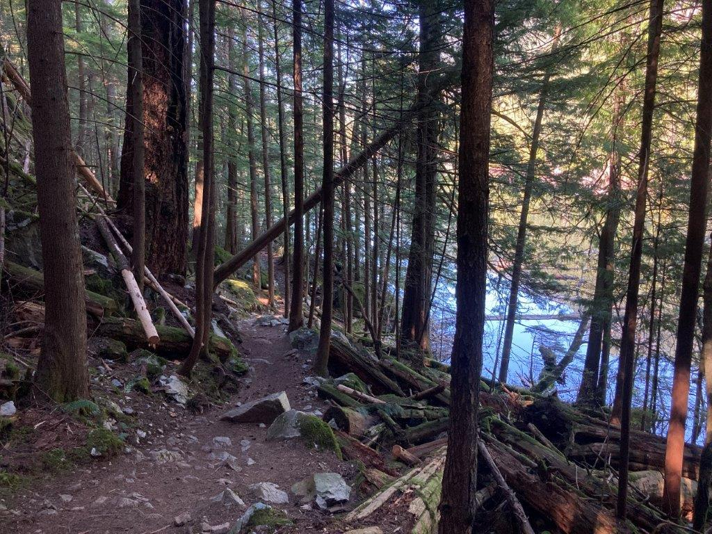 Brohm Lake Hikes trail through tall trees and the lake to the right