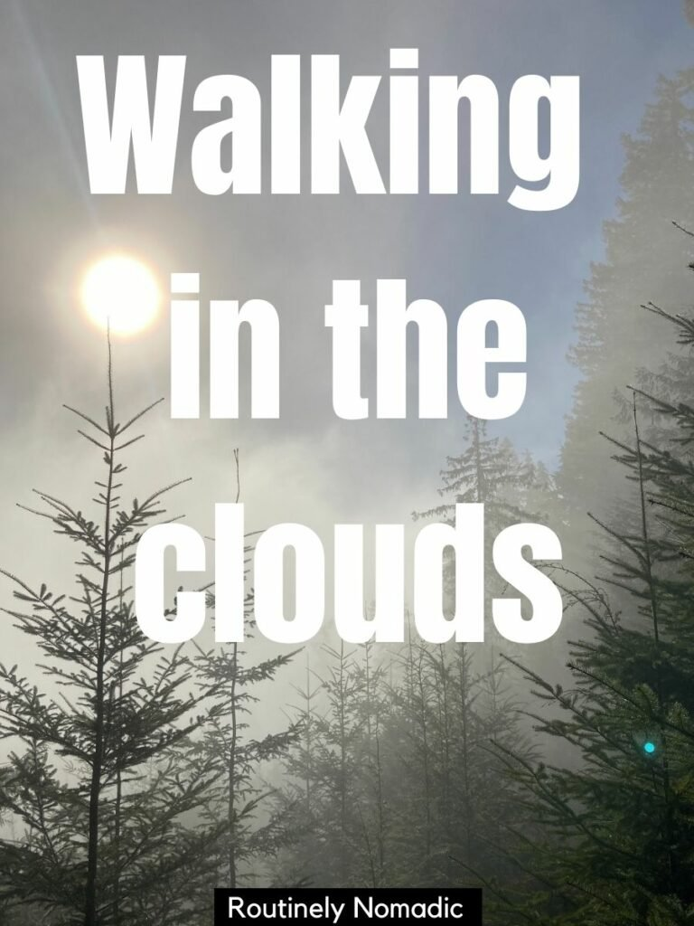 Foggy trees with a hint of sun and a caption for clouds photography that reads walking in the clouds