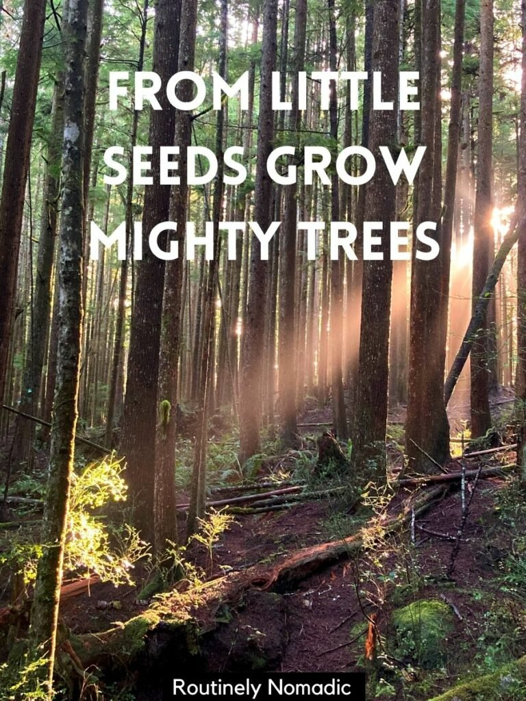 A sunbeam through the trees with a captions about trees that reads from little seeds grow mighty trees