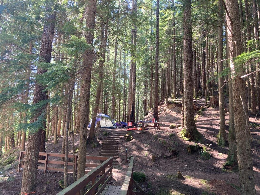 Tall trees and stairs leading up to a cat lake campground